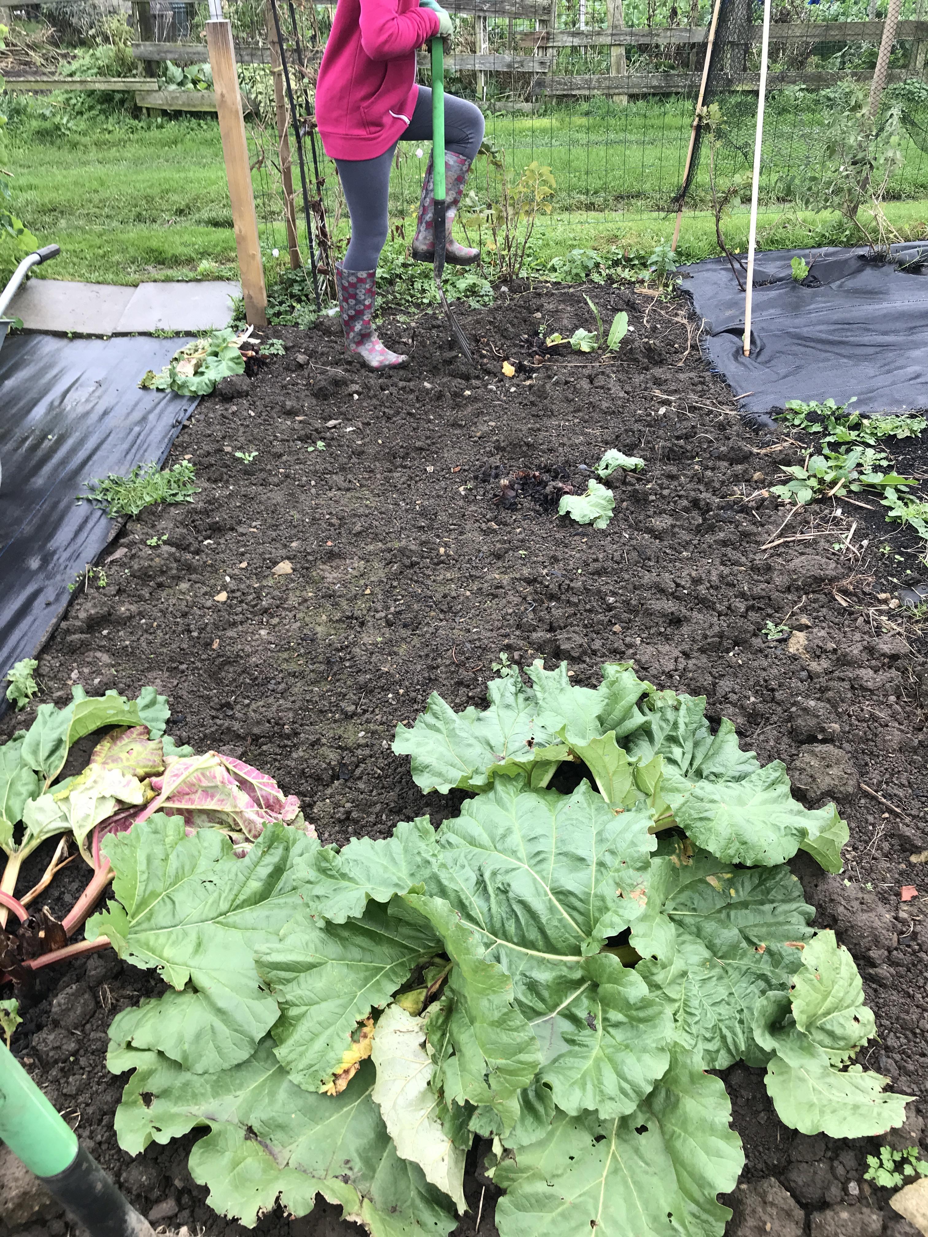 Moving the Rhubarb