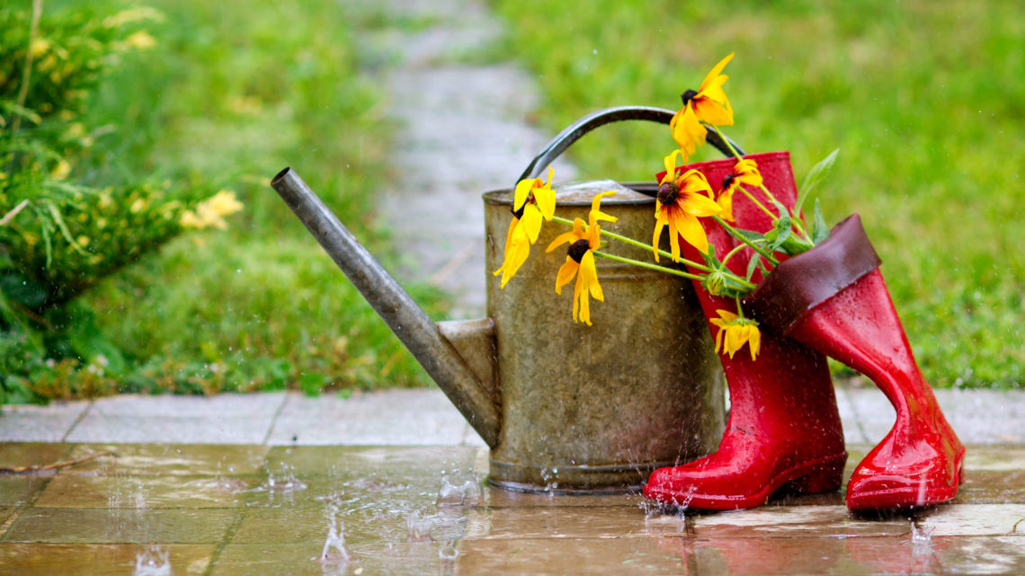 10 Reasons to Love Your Allotment in the Rain