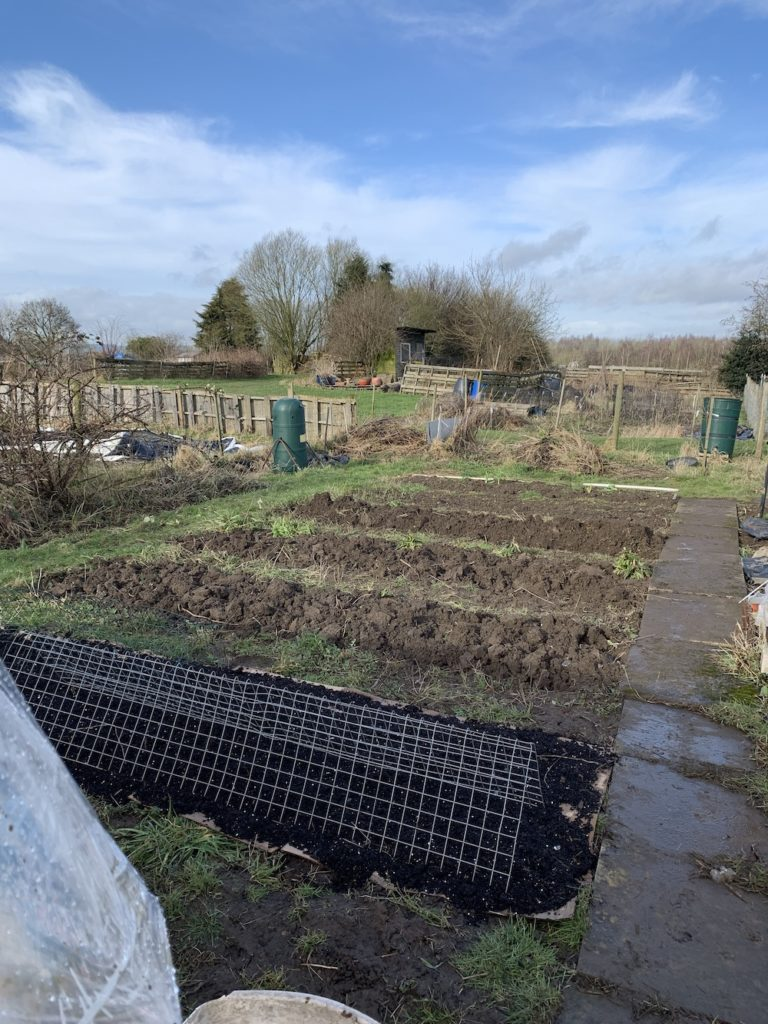 Winter digging allotment beds